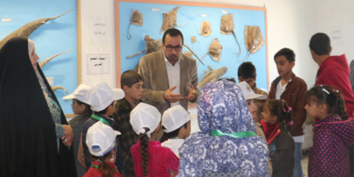 Tutoring & Teaching